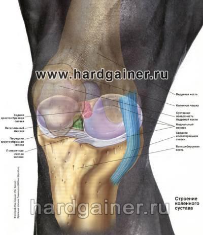боль при надавливании на коленный сустав